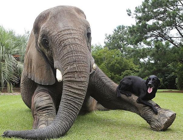 eikones elefantes