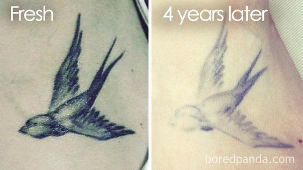 xelidoni tatouaz prin meta