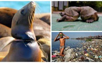 27 Εικόνες που θα σε πείσουν να κάνεις ανακύκλωση!