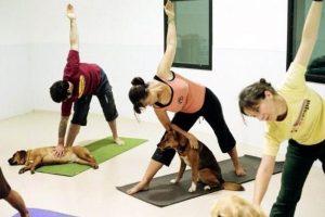 yoga me ton skilo sou