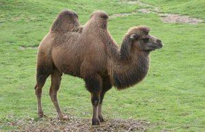 kamila me dio kampoures