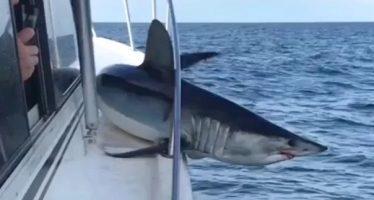 Τεράστιος καρχαρίας μάκο πήδηξε σε σκάφος και παγιδεύτηκε!
