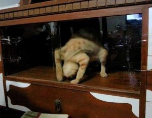creepy hello kitty loutrino