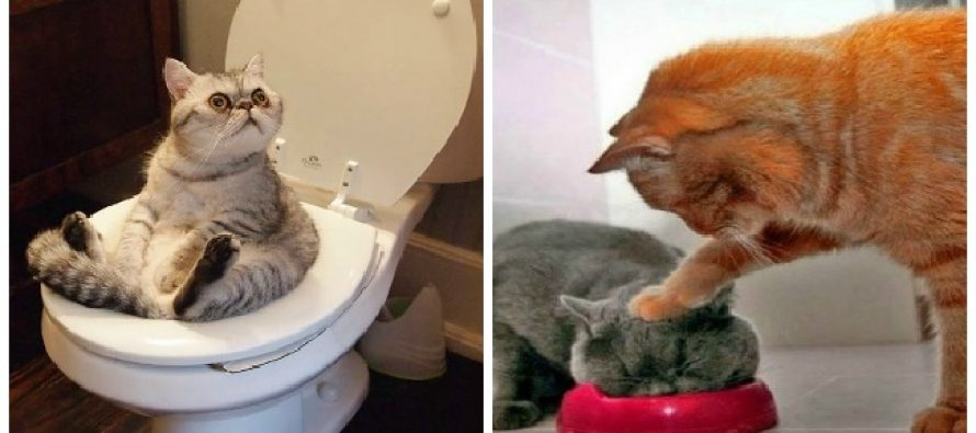20 Περίεργες και αστείες συμπεριφορές από γάτες!