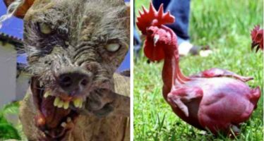 10 Τρομακτικά πλάσματα που δημιούργησε η επιστήμη!