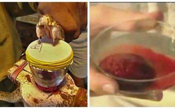 Αυτό συμβαίνει στο αίμα από το δηλητήριο των φιδιών!