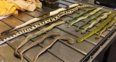 Μυστηριώδες κουτί με επικίνδυνα φίδια & αράχνες έφτασε στην Αυστραλία!