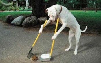 Τα 10 πιο έξυπνα σκυλιά του κόσμου εν δράσει!