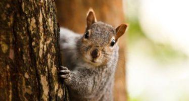 5 Πράγματα που δεν γνωρίζεις για τους σκίουρους!