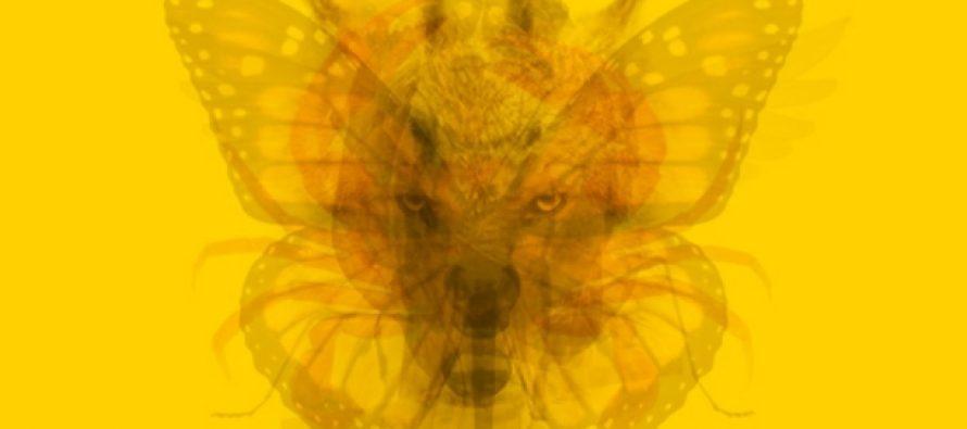 Το ζώο που βλέπεις πρώτο αποκαλύπτει την προσωπικότητά σου!