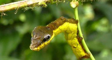 10 Πράγματα που βρέθηκαν στη φύση και είναι τρομακτικά!