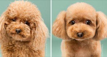 7 Σκυλάκια πριν και μετά το κομμωτήριο!
