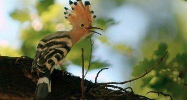 Τα 5 πιο περίεργα και σπάνια πουλιά του κόσμου!