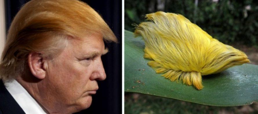 11 Ζώα με το χτένισμα του Donald Trump!