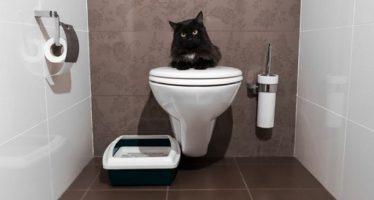 Γιατί σε ακολουθεί η γάτα σου στο μπάνιο!