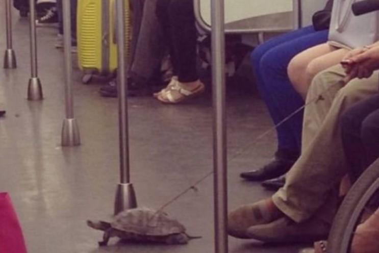 metro xelona