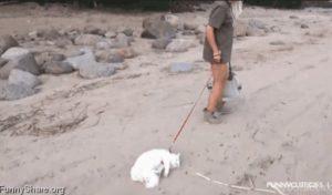 10 Fails με γάτες μέσα από αστεία gifs!