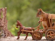 10 Υπέροχες εικόνες με σκίουρους που ποζάρουν μπροστά στο φακό!